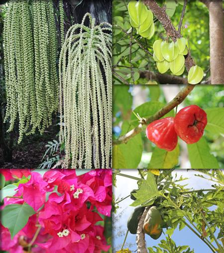 園内ツアーで見た植物