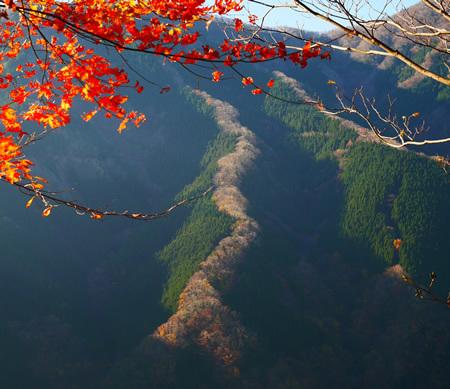 ナメゴ谷の天に昇る龍