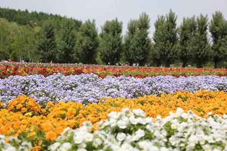 花も色とりどり