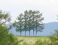 嵐の5本の木