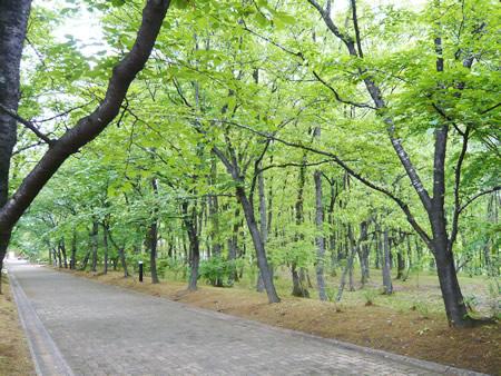 日田蒸留所は自然いっぱい